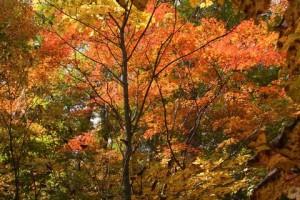 奥志賀渓谷の紅葉 10月8日撮影