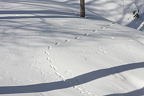 雪の庭を独り占め・・・・ 1月8日朝 撮影