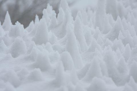 ほら、雪のたけのこ・・・・  2月20日撮影