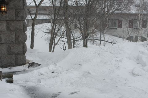 軒下の雪の上に・・・