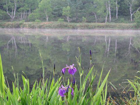 木戸池も初夏