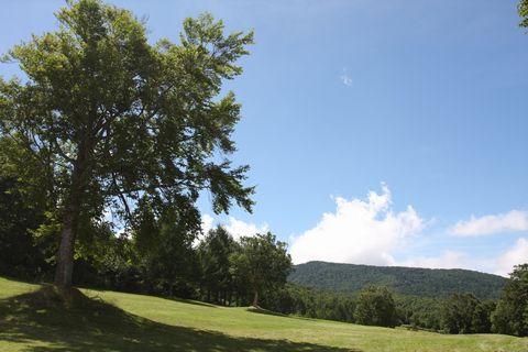 真夏の高原 清々しいです  8月12日撮影