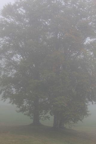 ブナの木は 偉大なる何かを隠し・・・