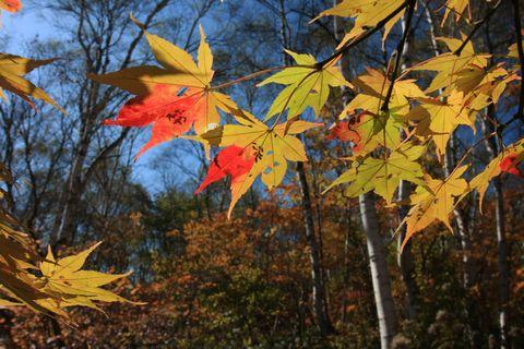 秋の時の流れ   10月13日撮影