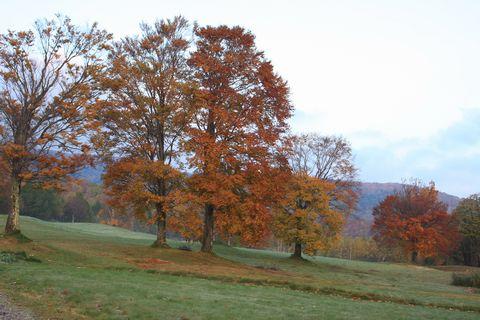 高原の朝は 深く静かな色合い