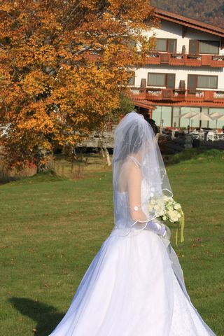 ブナの木が 清楚な花嫁を祝福    10月18日撮影