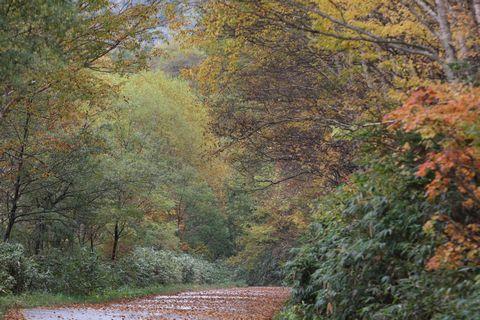 旧道は一之瀬から奥志賀へ      10月6日撮影