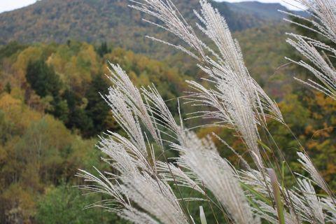 そして 「秋津島の秋」