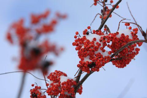 これも晩秋の彩り     11月3日撮影