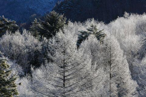 木々も冬の装いです