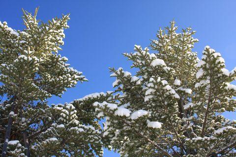 木々も冬化粧