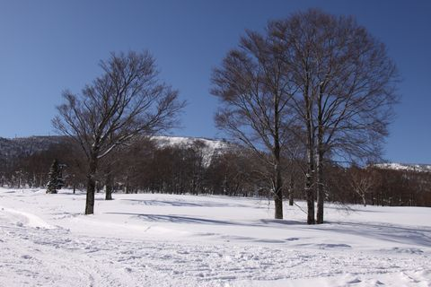 一月なのに 春うらら     1月19日撮影
