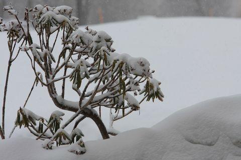 今朝はまた新雪が・・・・    2月28日撮影