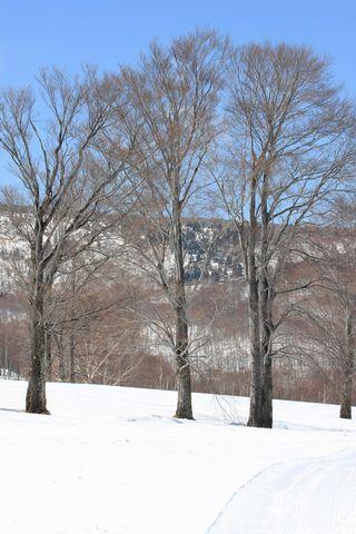 空の青さが柔らかになってきました         3月19日朝 撮影