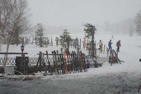 ランチ・タイムは霧の中・・・  3月21日撮影