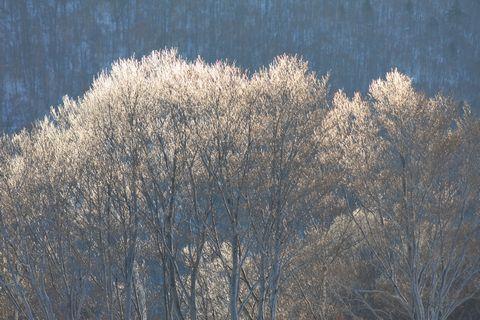 橘と桜のかわりに〝霧の木〟です   3月3日早朝 撮影