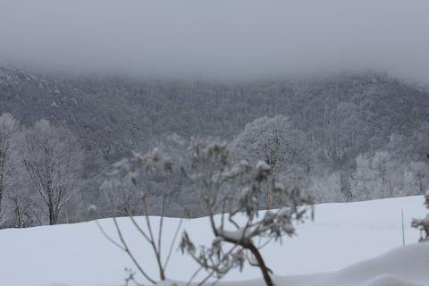 雪化粧の芍薬の向こうに雲海が・・・・(ホテル玄関前にて)