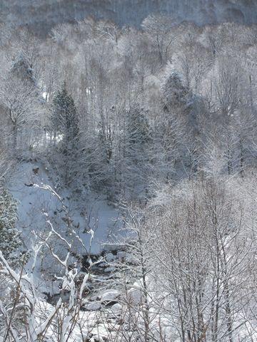 """満開の・・・・""""雪の花"""""""