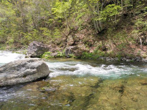 奥志賀渓谷: 岸には若葉 水には岩魚