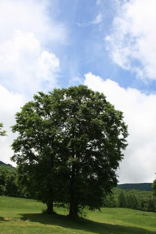 湿度60% の青空    6月28日昼 撮影
