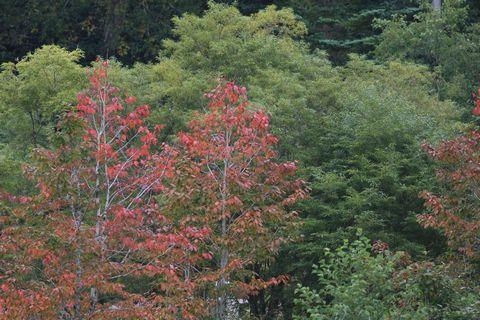 気がつけば 秋 です      9月22日撮影