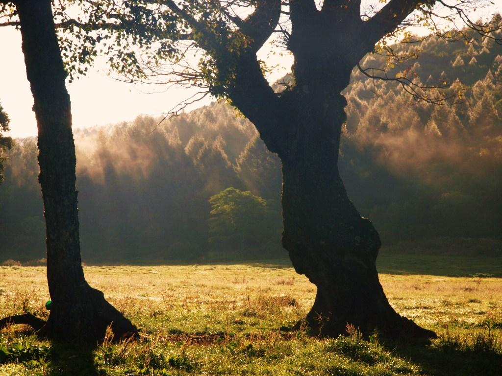 カヤノ平牧場のカラマツ林    9月9日早朝