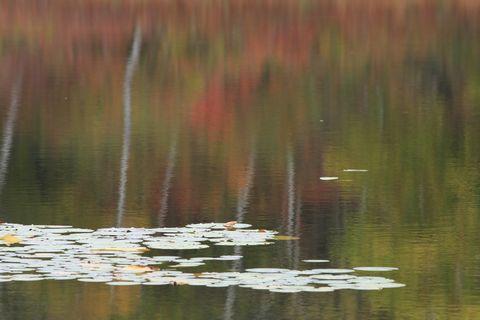 一沼 ~ひつじ草と紅葉