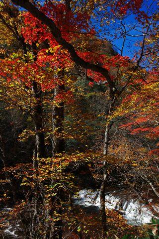 奥志賀渓谷 三段の滝       10月23日撮影