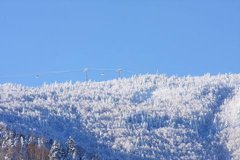 天然粉雪の森