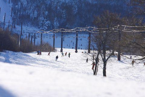 天然パウダーがまぶしい    1月8日撮影