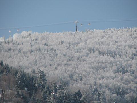 霧氷の林もリフレッシュ