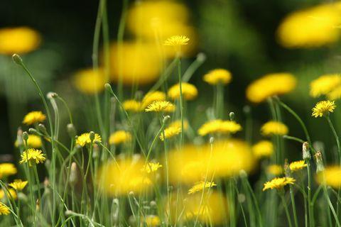 今夏の高原の花たちはとっても元気。