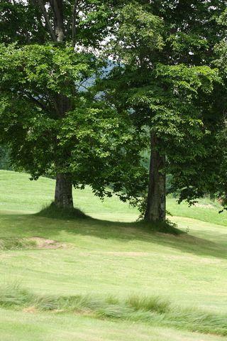 ブナの木陰が高原のプレミアムシートです。