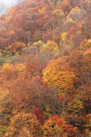 奥志賀渓谷から秋山郷へ      10月27日撮影