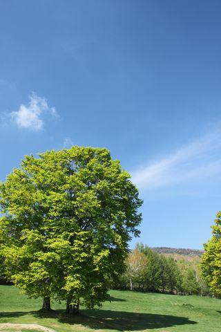 大きなブナの樹の下で・・・・     6月4日撮影