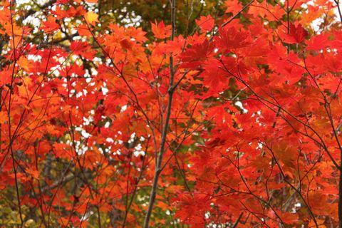 奥志賀にて            10月10日午後 撮影