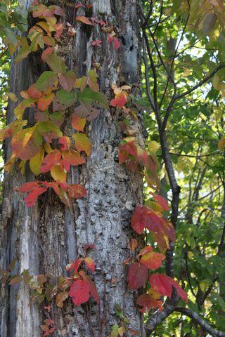 秋の木は 絵 そのもの