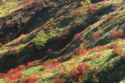 芳ヶ平  その1              10月11日撮影
