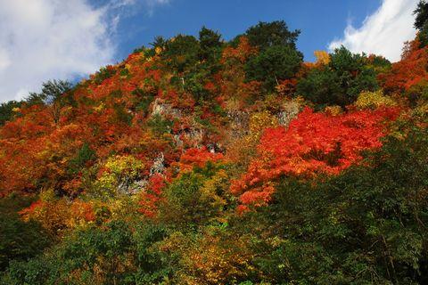 奥志賀林道 ~ 秋山郷へ  その1         10月30日撮影