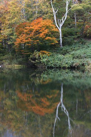 秋山郷 天池