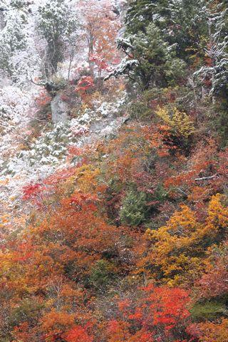 奥志賀公園栄線 沿道       11月4日撮影