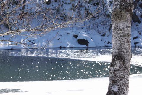 冬の陽だまり—琵琶池にて