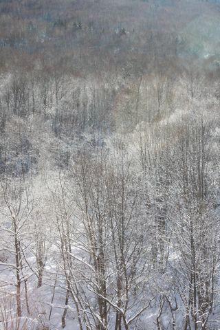 奥志賀高原の霧氷