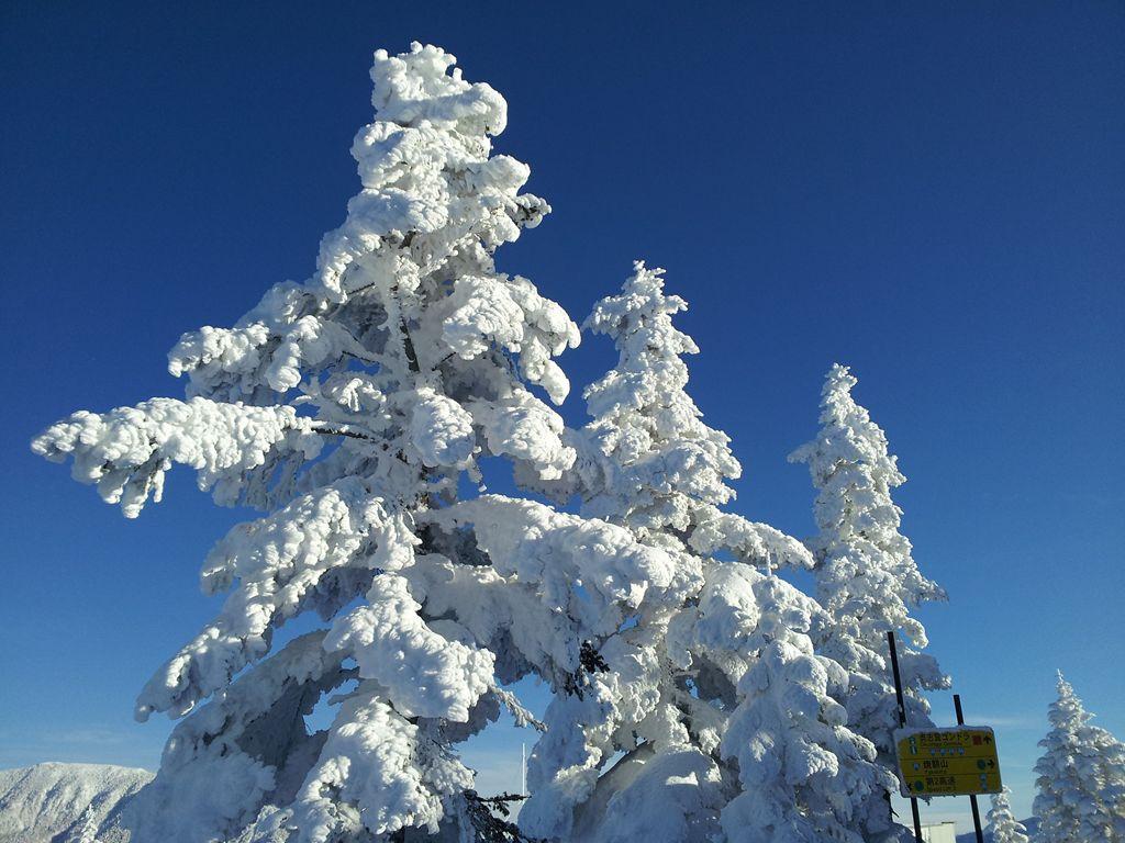 標高1900mの樹氷
