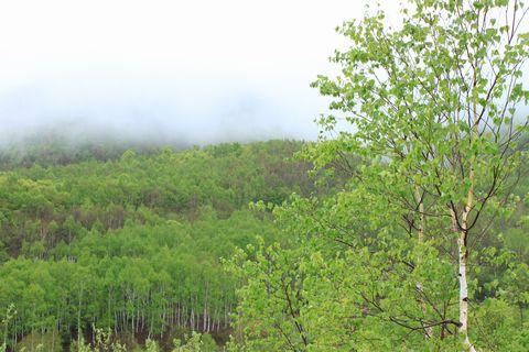 春雨に煙る・・・・                5月30日撮影