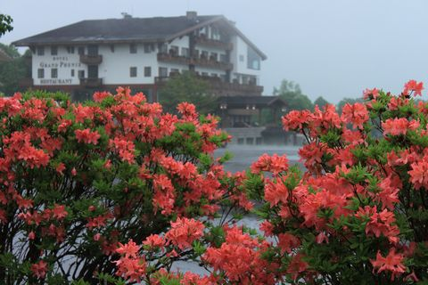 鮮やかな梅雨       6月15日 撮影