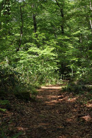 渓流沿いのブナ原生林 遊歩道