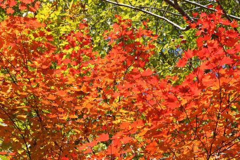 奥志賀渓谷にて        10月22日撮影