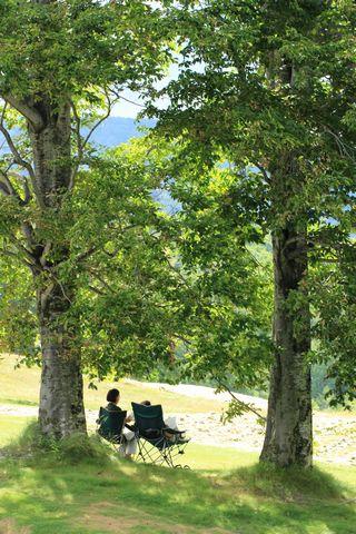 ブナの木陰で 読書              8月6日撮影