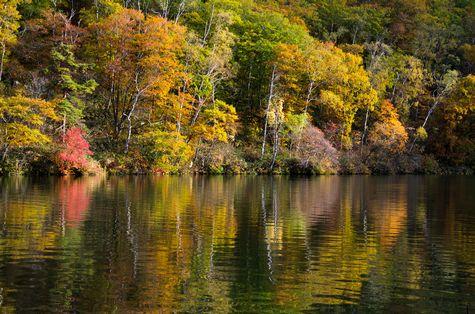 初日は 志賀高原・丸池にて          10月7日撮影